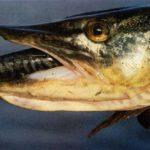 Koniec z zacinaniem ryb?